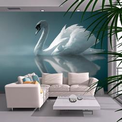 Fotótapéta - Fehér hattyú