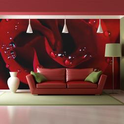 Fotótapéta - Vörös rózsa vízcseppek