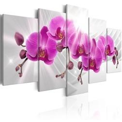 Kép - Abstract Garden: Pink Orchids