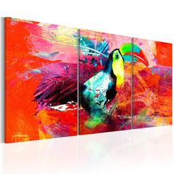 Kép - Colourful Toucan
