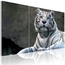 Kép - White tiger