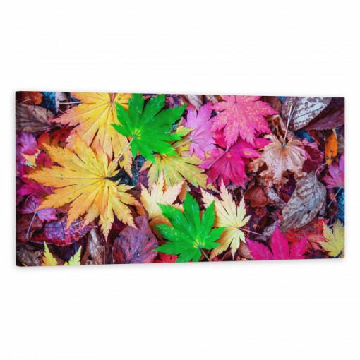 Tablou Canvas, Frunze colorate