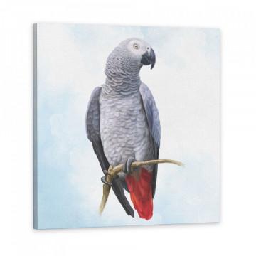 Set 3 Tablouri Canvas, Papagali