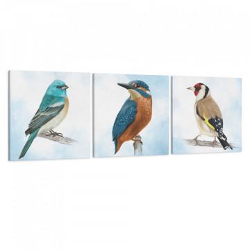Set 3 Tablouri Canvas, Pasari colorate
