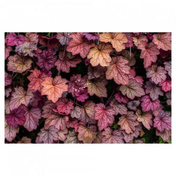 Fototapet autoadeziv - Frunze colorate
