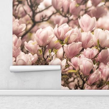 Fototapet autoadeziv - Magnolie roz