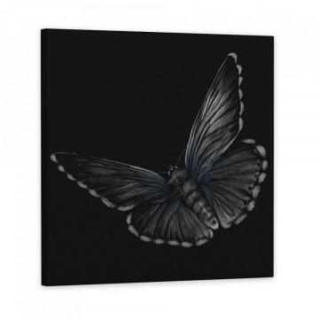 Tablou Canvas, Fluture