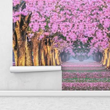 Fototapet autoadeziv - Alee cu pomi infloriti