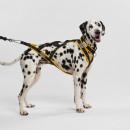 Ham Seppala - pentru câini se talie medie
