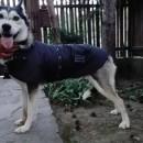 Jachetă thermo Amundsen - pentru câini de talie medie