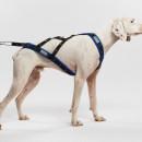 Ham Inuit - pentru câini de talie medie