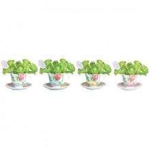 Set pentru cultivat plante aromatice