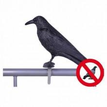 Sperietoare Corb pentru porumbei