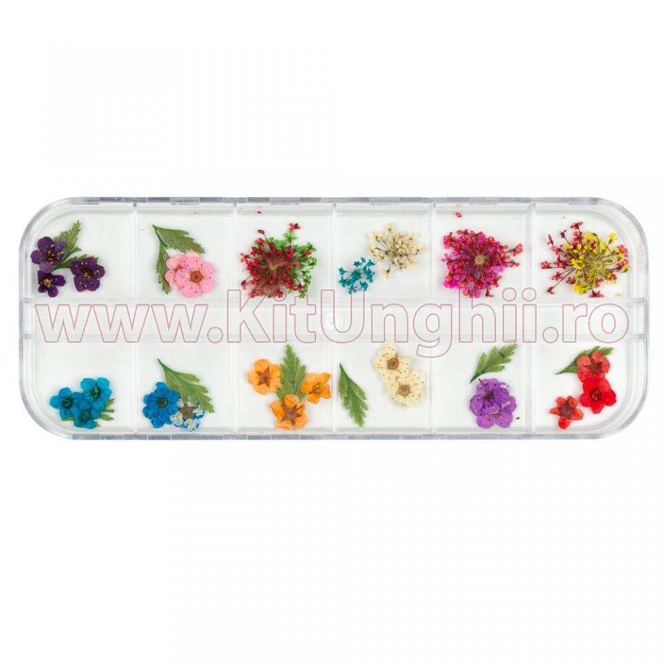 Flori Uscate Pentru Unghii Flowers From Heaven