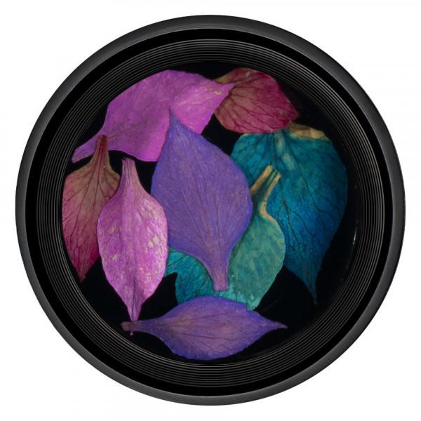 Poze Frunze Uscate Unghii LUXORISE Nature #03