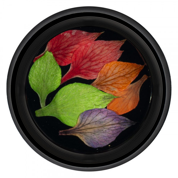 Poze Frunze Uscate Unghii LUXORISE Nature #01