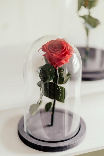 cupole sticla cu suport