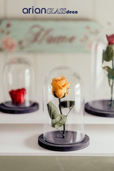 cupole sticla