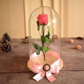 cupola pentru trandafiri criogenati