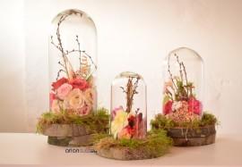 cupole sticla pentru trandafiri criogenati