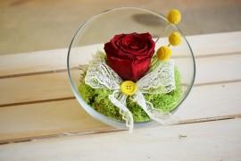 bol sticla pentru trandafiri criogenati