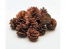 Conuri de pin mari - punga 50 buc