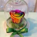 cupola sticla pentru trandafiri criogenati