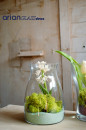 Pachet florarie: 3 vaze Alexsia, Otis si Maine plus cub 10x10x10 gratis