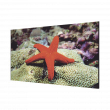 Dsd2055luy Hikvision Pantalla LCD 55 Para TV WALL / Entrada