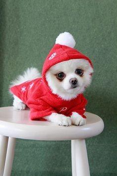 Haina caini Puppia Snowday imagine