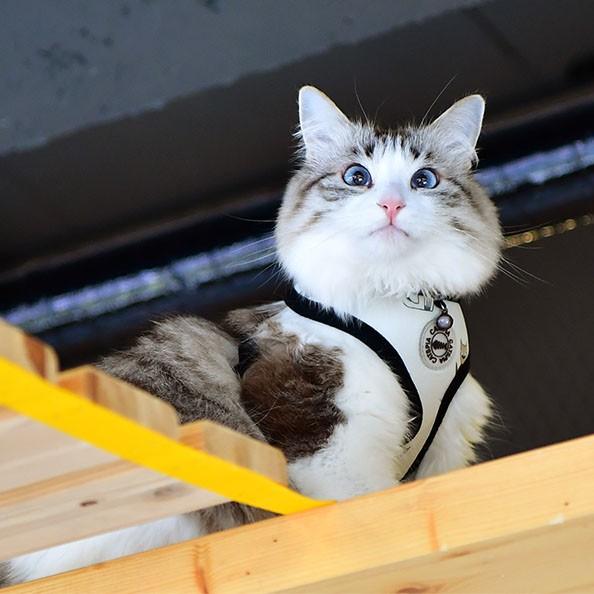 Ham pisici Calypso Catspia imagine