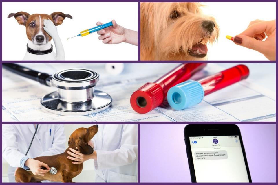 Pachet anual Preventiv caini/pisici imagine