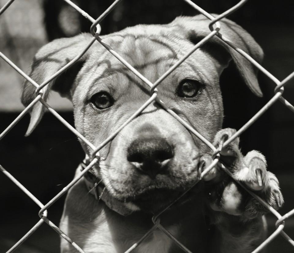 1kg Donatie mancare caini adăpost imagine