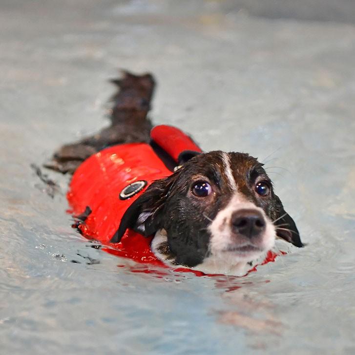 Vesta de salvare caini Puppia Irwin Life imagine