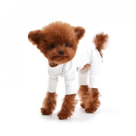 Haina caini Puppy Angel Mac PA-OR211