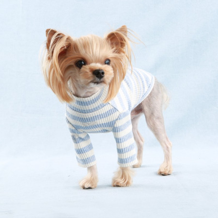 Haina caini Puppy Angel Saint Angels - PA-TS589