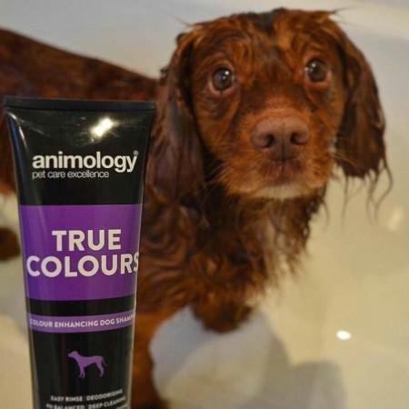 Sampon Animology True Colors- (Blana Multicolora 250ml)