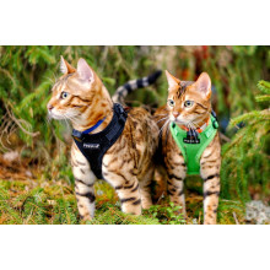 Ham Puppia Ritefit caini pisici reglabil