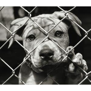 1kg Donatie mancare caini adăpost