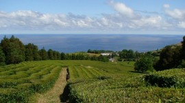 Chá Verde Gorreana Açores Hysson e Hortelã Pimenta 80gr x 2 uni.