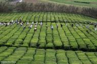 Chá Gorreana dos Açores Orange Pekoe Preto 100g x 2 uni
