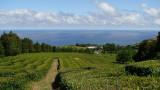 Chá Verde Gorreana dos Açores combinado 80g x 3 uni.