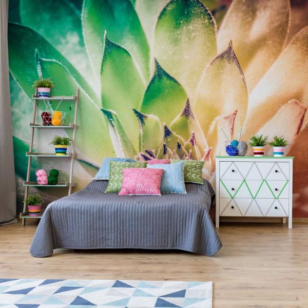 Aloe Plant Green And Orange Photo Wallpaper Wall Mural