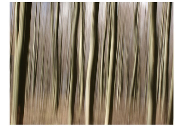 Fototapet - Forest