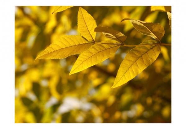 Fototapet - Leaves - sunny summer day