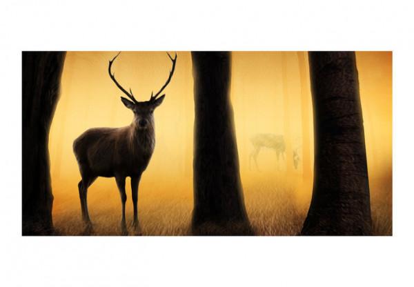 Fototapet XXL - Deer in his natural habitat