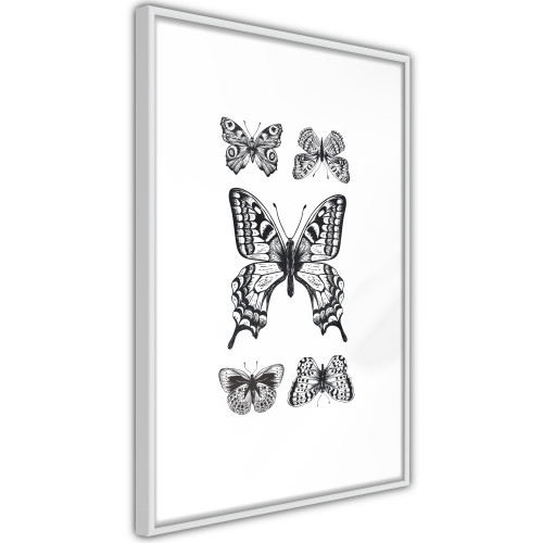 Poster - Butterfly Collection IV