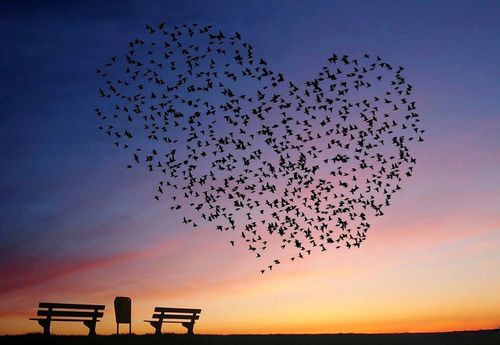 Love Is In The Air Photo Wallpaper Mural