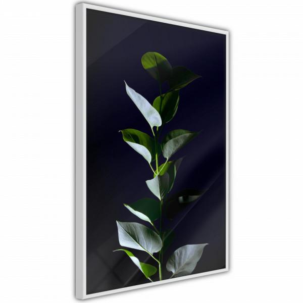 Poster - Floral Elegance