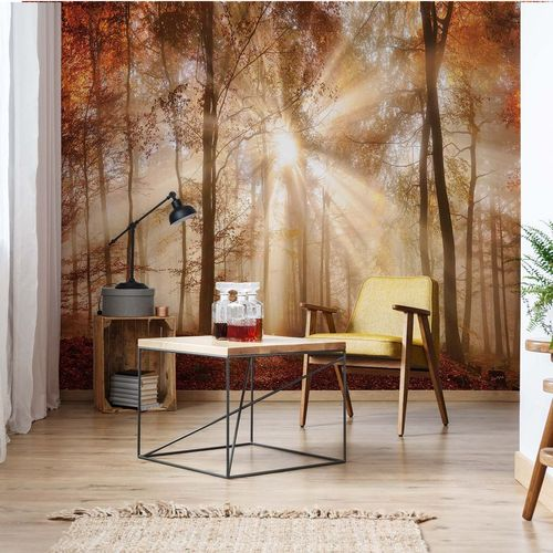 Autumn Trees Forest Sunshine Photo Wallpaper Wall Mural
